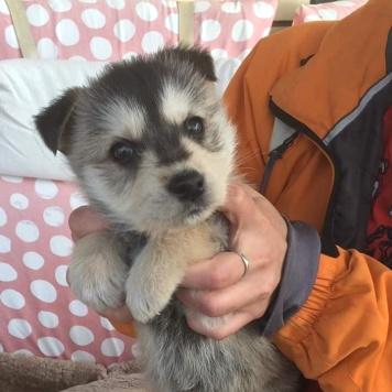 Ластик - Собаки в добрые руки