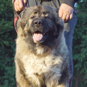 Момоша - Собаки в добрые руки
