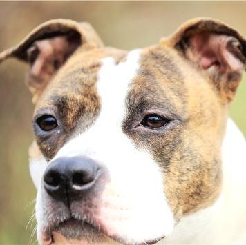 Орегона - Собаки в добрые руки