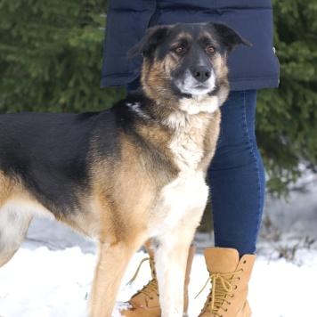 Даяна - Собаки в добрые руки