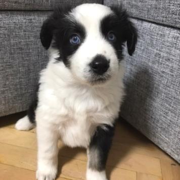 Аннабель - Собаки в добрые руки