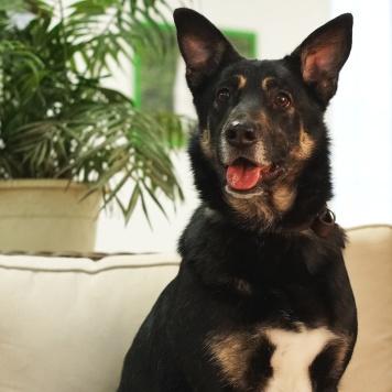 Ксюша - Собаки в добрые руки
