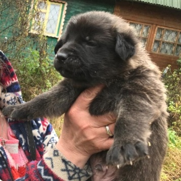 Потап - Собаки в добрые руки