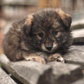 Бэйби - Собаки в добрые руки