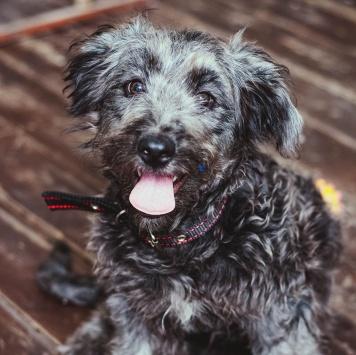 Синтия - Собаки в добрые руки
