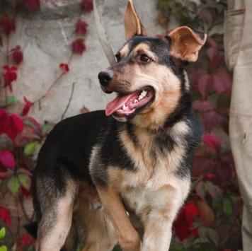 Чакки - Собаки в добрые руки