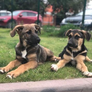 Морковка и Тыковка - Собаки в добрые руки