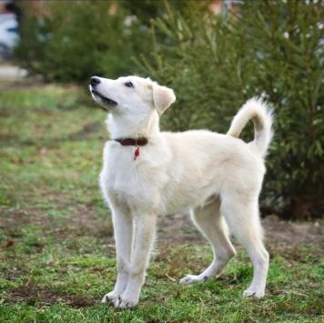Маасдам - Собаки в добрые руки