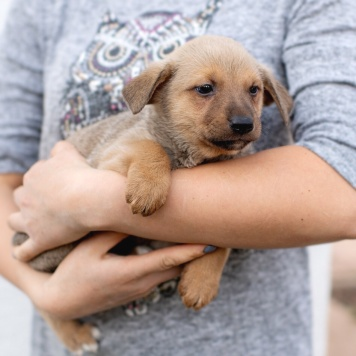 Реди - Собаки в добрые руки