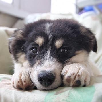 Бафи - Собаки в добрые руки