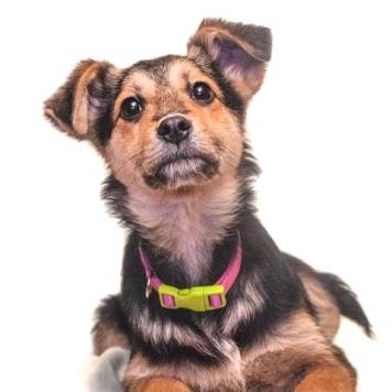 Бетти - Собаки в добрые руки