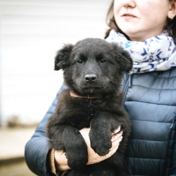 Нельсон - Собаки в добрые руки