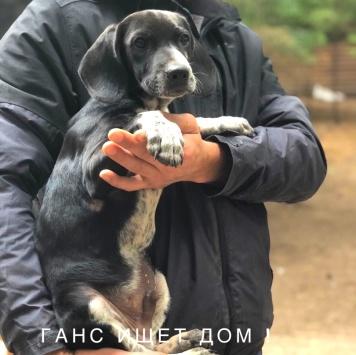 Ганс - Собаки в добрые руки