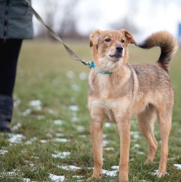 Рыжуленька - Собаки в добрые руки