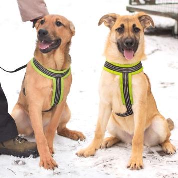 Афина и Берта - Собаки в добрые руки