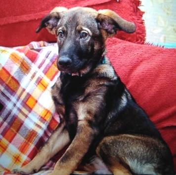 Крендель - Собаки в добрые руки