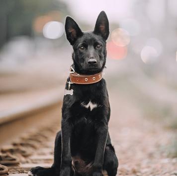 Дарк - Собаки в добрые руки