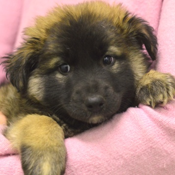 Бетховен - Собаки в добрые руки
