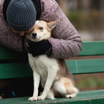 Тэсса - Собаки в добрые руки