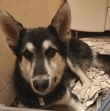Гарк - Собаки в добрые руки