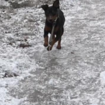 Честер - Собаки в добрые руки