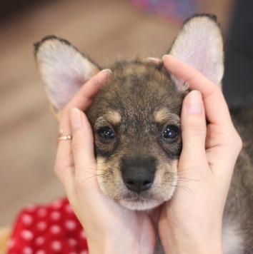 Мэгги - Собаки в добрые руки
