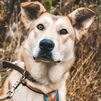 Илан - Собаки в добрые руки