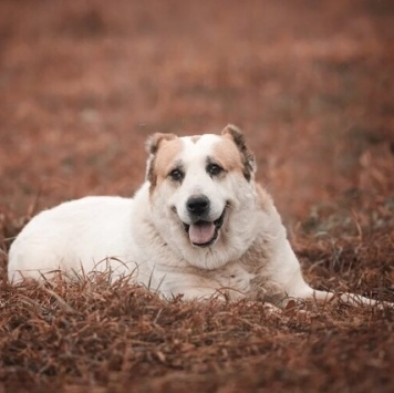 Пава - Собаки в добрые руки