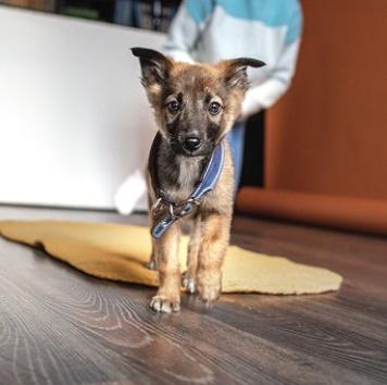 Лори - Собаки в добрые руки