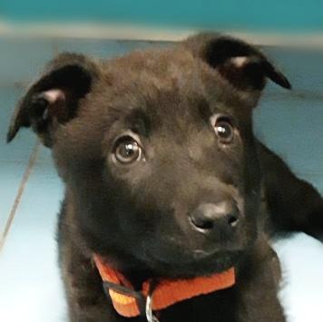 Черничка (Ника) - Собаки в добрые руки