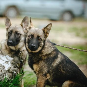 Сестрички - Собаки в добрые руки