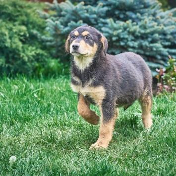 Красавчик Кевин - Собаки в добрые руки