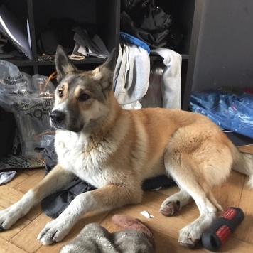 Сеня - Найденные собаки