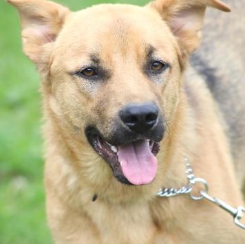 Гризлик - Собаки в добрые руки