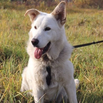 Завгар - Собаки в добрые руки