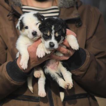 Фикс и Фукс - Собаки в добрые руки