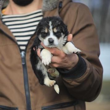Фукс - Собаки в добрые руки