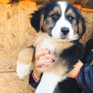 Весёлая Эльза - Собаки в добрые руки