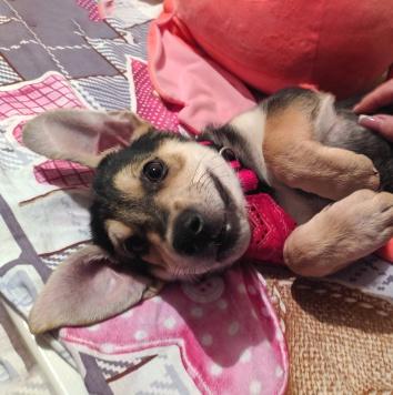 Амир - Собаки в добрые руки