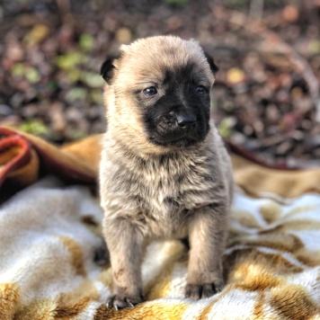 Малыши-крепыши - Собаки в добрые руки