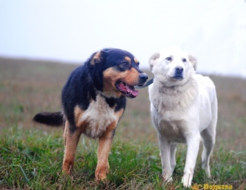 Барни и Лана - Собаки в добрые руки