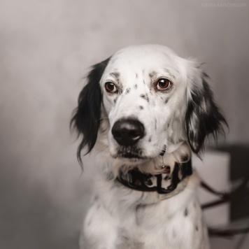 Клинт - Собаки в добрые руки