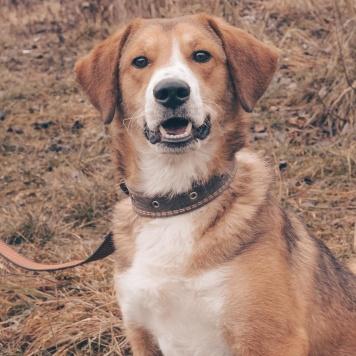 Озорной рыжий пес Вотсап - Собаки в добрые руки