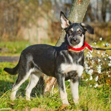 Кедра - Собаки в добрые руки