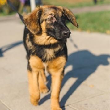 Манюня - Собаки в добрые руки