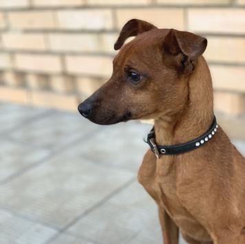Эйджей - Собаки в добрые руки
