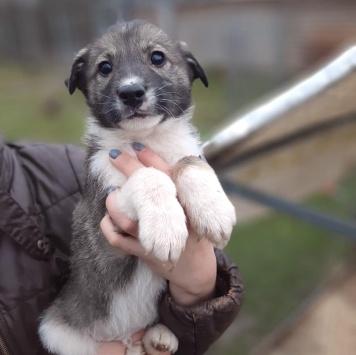 Бинго - Собаки в добрые руки