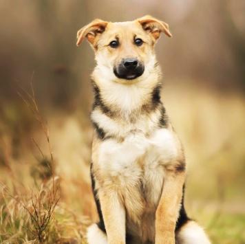 Анита - Собаки в добрые руки