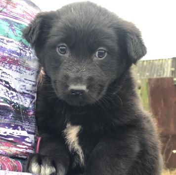 Лайма - Собаки в добрые руки