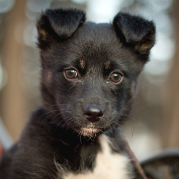 Полли - Собаки в добрые руки